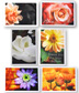 Floral Greeting Cards Package of six greeting cards and envelopes with floral photography and inspirational quotes.